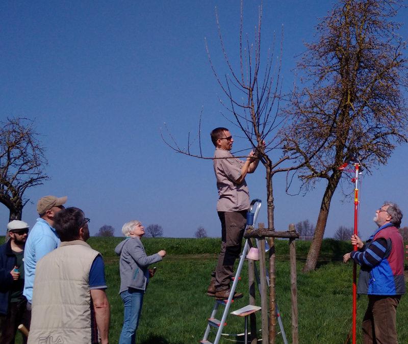 Obstbaum-Schnittkurs mit Stephan Nerge